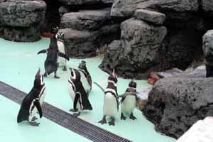 上越市水族博物館(5/2)=マゼランペンギン